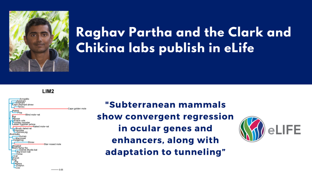 Partha-Clark-Chikina-publish-elife